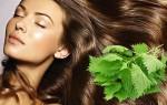 Как применять масло крапивы для домашнего ухода за волосами?