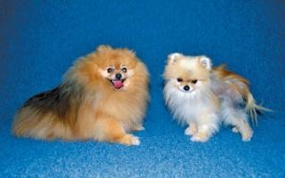 Алопеция у собак: причины и способы лечения